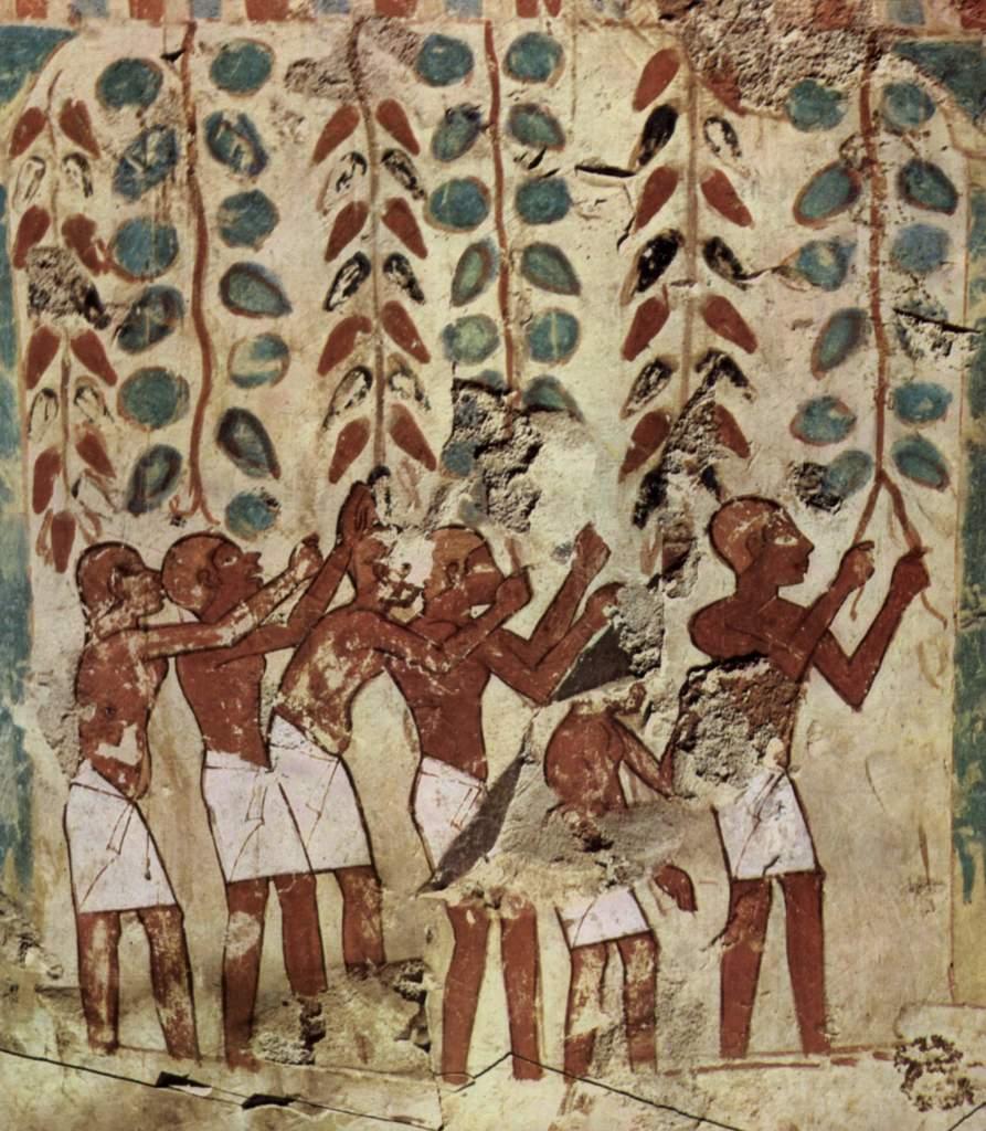 La coltivazione del Melograno nell'Antico Egitto
