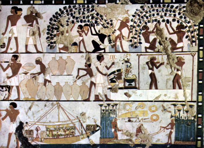Il melograno: vino degli egizi